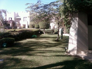 Lawn at Sharm-El-Sheikh