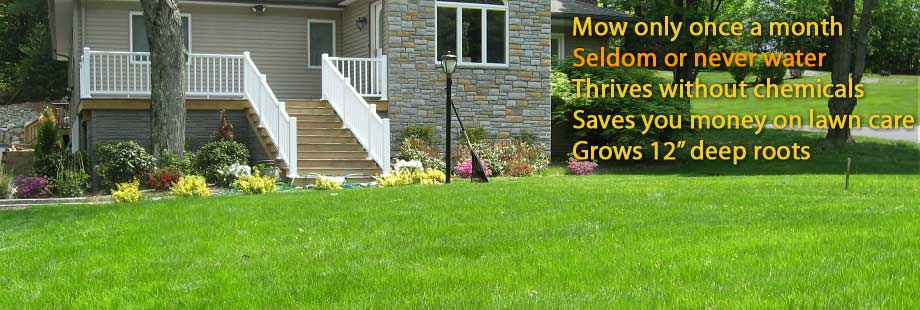 Lawn and Grass Seed for Ultra Low Maintenance Lawns Pearl's