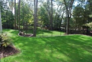New Lawn After Just 3 Weeks!