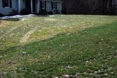 Pearl's Premium lawn (foreground) Stays Greener in Winter