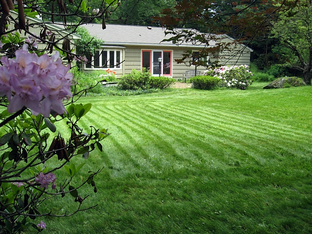 This lawn is cut once a month one average; its cut high with a sharp blade