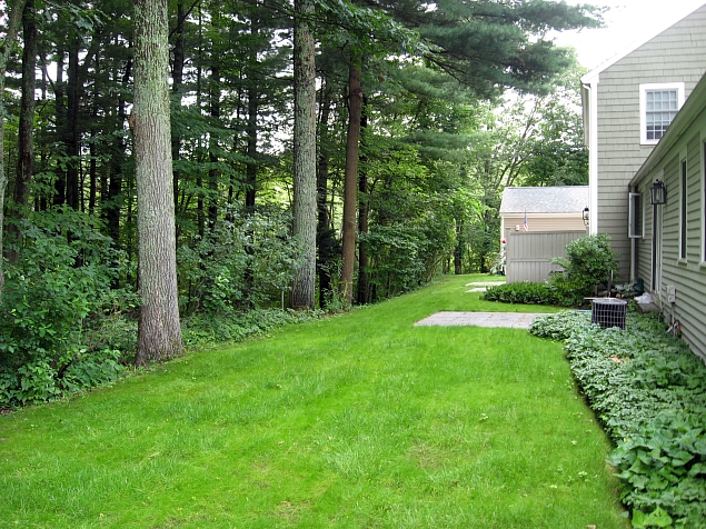 Condo Association Overcomes Moss, Deep Shade and Acid Soil with Pearl's Premium