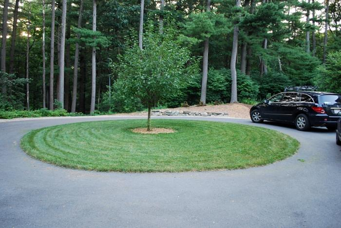 Pearl's Premium's Deep Roots Stand up to Hot Sun and Driveway Heat