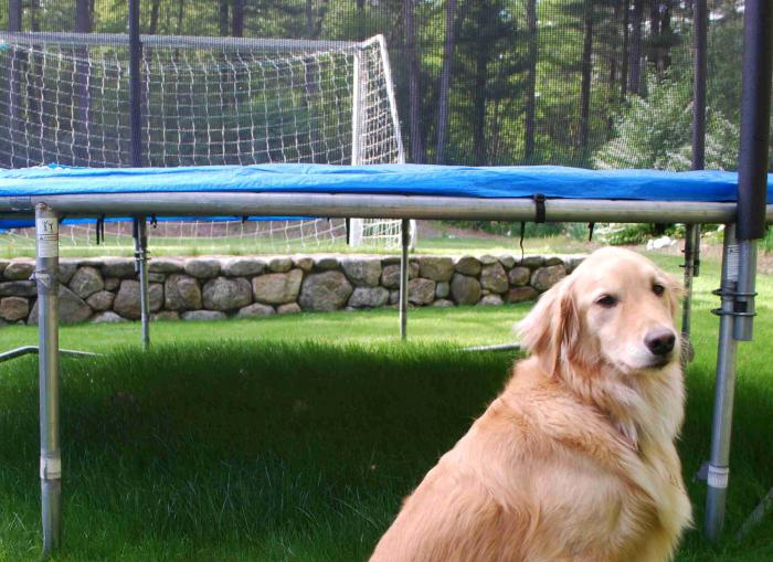 Trampoline - Gracie Inspects Shady Mix Growing under Trampoline